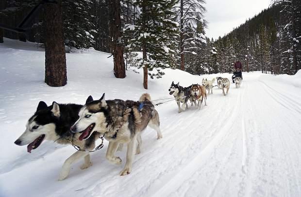 Dog Sledding in Breckenridge CO