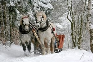Two horses pulling a sleigh through snowy woods.