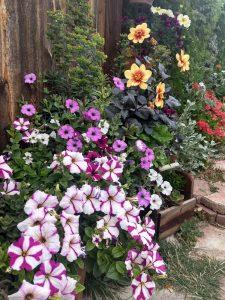 Brandon's flower garden